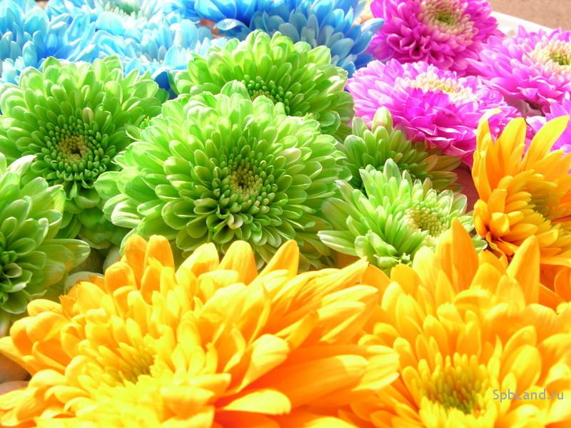Картинки на телефон 240х320 цветы 5