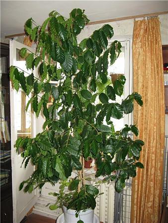 Комнатные растения что выбрать и как