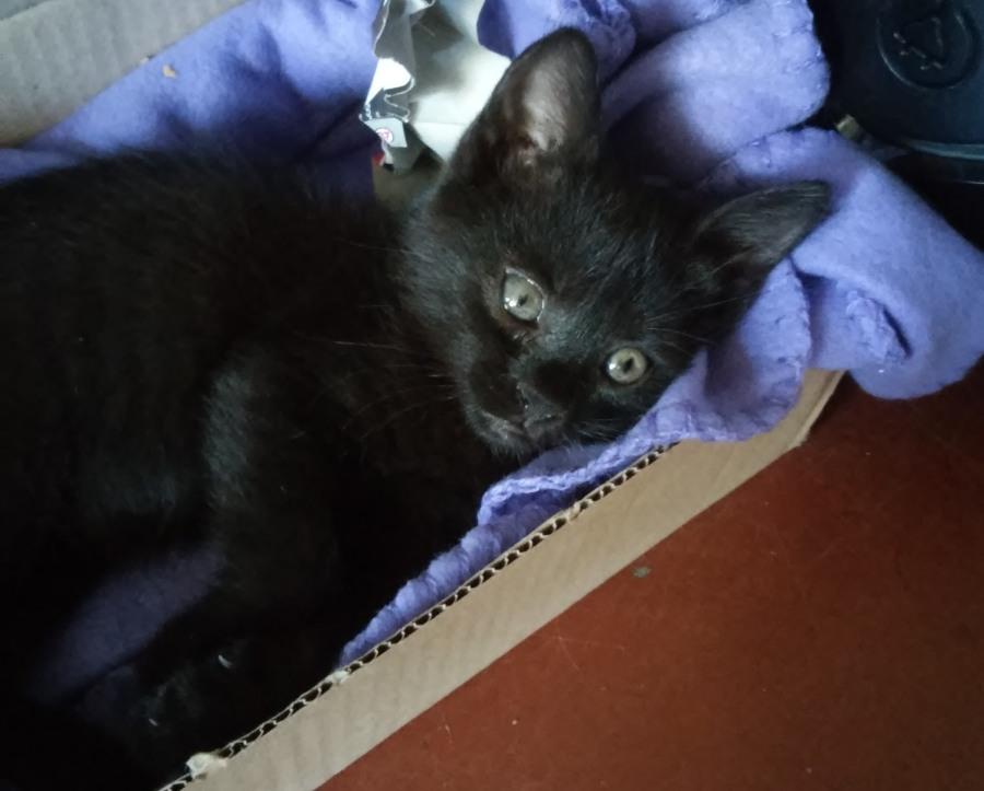 Название:  cat.jpg Просмотров: 374  Размер:  103.6 Кбайт
